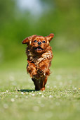 DOG 09 PE0018 01
