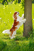 DOG 09 PE0021 01