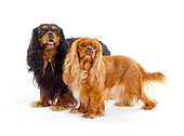 DOG 09 PE0025 01