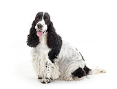 DOG 09 PE0026 01