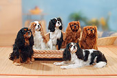 DOG 09 PE0029 01