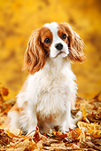 DOG 09 PE0042 01