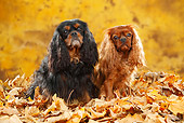 DOG 09 PE0045 01