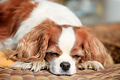 DOG 09 PE0048 01