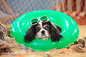 DOG 09 PE0049 01