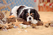 DOG 09 PE0050 01