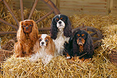 DOG 09 PE0051 01