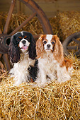 DOG 09 PE0052 01