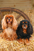 DOG 09 PE0053 01