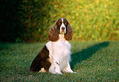 DOG 09 RK0002 04