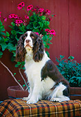 DOG 09 RK0015 03