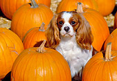 DOG 09 RK0025 02