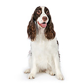 DOG 09 RK0061 01