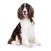 DOG 09 RK0062 01