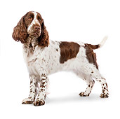 DOG 09 RK0064 01