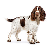 DOG 09 RK0065 01