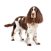 DOG 09 RK0068 01