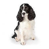 DOG 09 RK0072 01