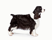 DOG 09 RK0076 01