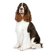DOG 09 RK0078 01