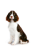 DOG 09 RK0080 01