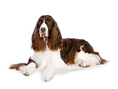 DOG 09 RK0081 01