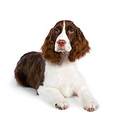 DOG 09 RK0082 01