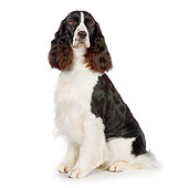 DOG 09 RK0083 01