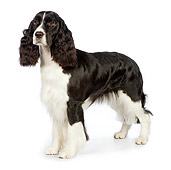 DOG 09 RK0084 01