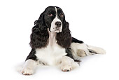 DOG 09 RK0085 01