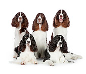 DOG 09 RK0086 01