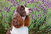 DOG 09 RK0091 01