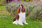 DOG 09 RK0092 01