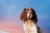 DOG 09 WF0002 01