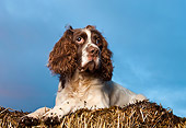DOG 09 WF0003 01