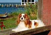 DOG 09 CE0002 01