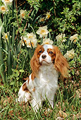 DOG 09 CE0003 01