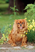 DOG 09 CE0010 01