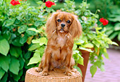 DOG 09 CE0014 01