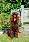 DOG 09 CE0015 01