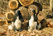 DOG 09 CE0020 01