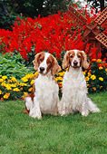 DOG 09 CE0025 01