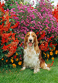 DOG 09 CE0026 01