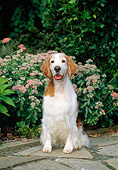 DOG 09 CE0027 01