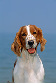 DOG 09 CE0028 01
