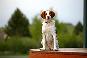 DOG 09 DB0002 01