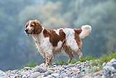 DOG 09 KH0001 01