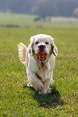 DOG 09 KH0003 01