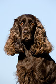 DOG 09 KH0004 01