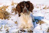 DOG 09 LS0002 01